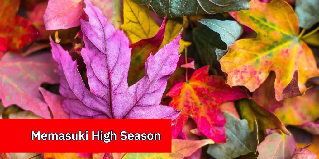 Memasuki High Season